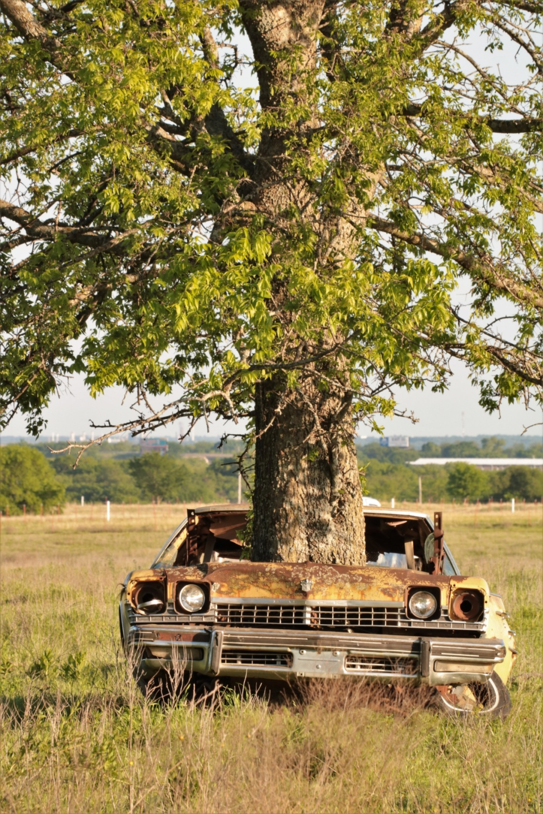 tree-growing-out-of-abandoned-car-3